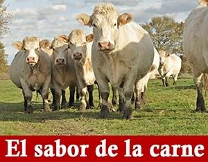 SaborCarne